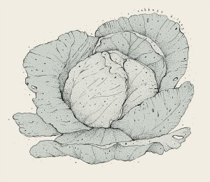 Cabbage-blog